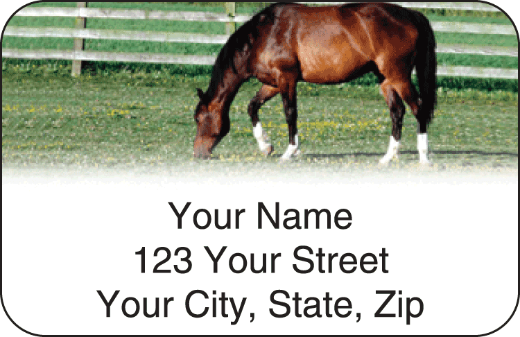 horse enthusiast address labels - click to preview