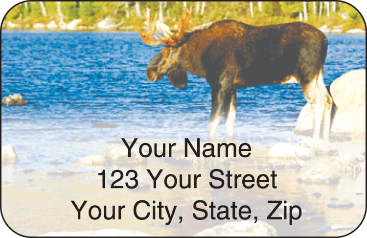 Wildlife Address Labels - click to view larger image